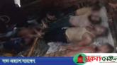 ঘূর্ণিঝড় 'বুলবুলে' নিখোঁজ ১০ জেলের মরদেহ উদ্ধার