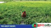 'বুলবুল তাণ্ডবে ২৬৩ কোটি টাকার ফসল নষ্ট,  ৫০৫০৩ কৃষক ক্ষতিগ্রস্ত'