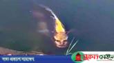 ঘুরে বেড়াচ্ছে 'মানুষমুখো মাছ' ভিডিও ভাইরাল
