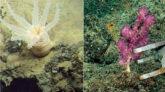 সমুদ্রের গভীরে ৩০টি নতুন প্রজাতির সন্ধান, অবাক বিজ্ঞানীরা